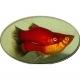 plati balık